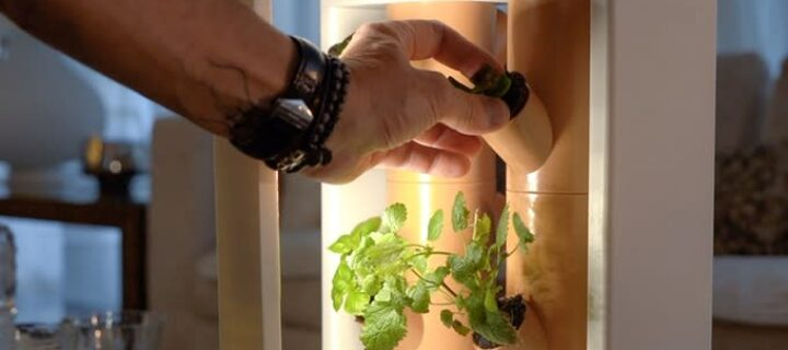 Grow your vegetables indoors with Boombi